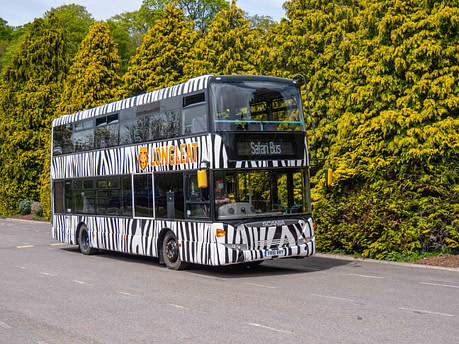 Double decker safari bus